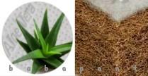 Kókuszmatrac, Latexált, Aloevera huzat, 60x120x6cm